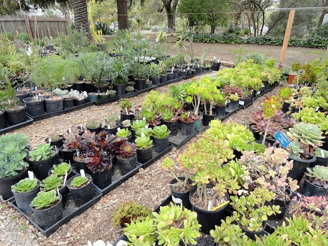 plant-sale-inventory-2