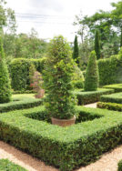 Don't give up on boxwood