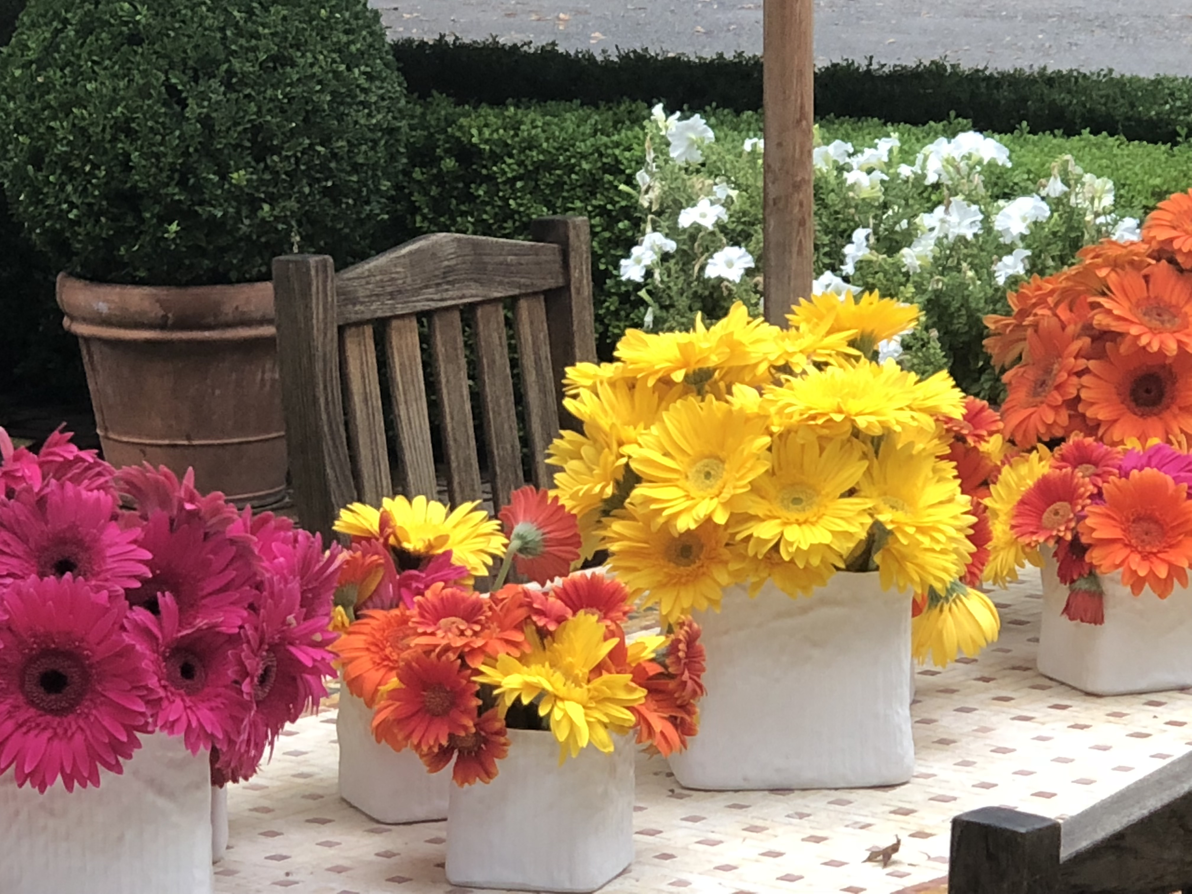 Gerbera daisies gerbera daisies come in a variety of bright colors pink salmon orange yellow and white and their flowers range from 2 to 5 izmirmasajfo